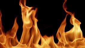 Realistyczny ogień HD, loopable royalty ilustracja