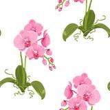 Realistyczny phalaenopsis ćma orchidei kwiecisty wzór Zdjęcie Royalty Free