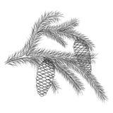 Realistyczny rocznika rytownictwa wianek jodła rozgałęzia się i sosnowi rożki, koraliki odizolowywający na białym tle Boże Narodz Zdjęcia Royalty Free
