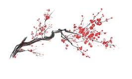 Realistyczny Sakura okwitnięcie odizolowywający na białym tle royalty ilustracja