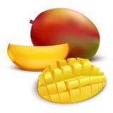 Realistyczny Szczegółowy Owocowy mango wektor royalty ilustracja