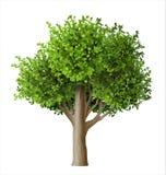 Realistyczny wektorowy drzewo z liśćmi Fotografia Royalty Free