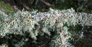 In realm of fine mosses and lichens Stock Photography