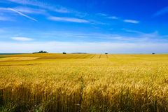 Reaped field and green hill view on a sunny day. In France Royalty Free Stock Photos