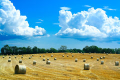 Reaped field and straw rolls. Lovely country-side landscape in southern Sweden Royalty Free Stock Image