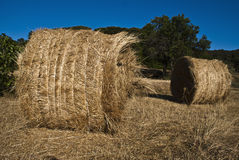 Reaped hay Stock Photos