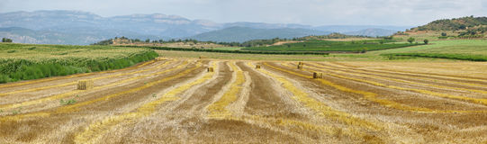 Reaped wheat fields in La Noguera Stock Photography
