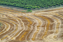 Reaped wheat fields in La Noguera Stock Photos