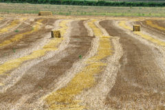 Reaped wheat fields in La Noguera Stock Image