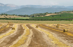 Reaped wheat fields in La Noguera Royalty Free Stock Image