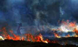 The reaper. A farm labourer fights a gorse fire on Mulfra hill, West Cornwall, the pose and perspective give a grim reaper look Stock Images