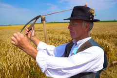 Reaper in the field. Man is preparing to harvest wheat, photography Stock Photo