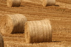 Reaping time. Harvesting in ireland, cork county rye and wheat plantation Royalty Free Stock Photo