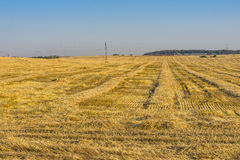 Reaping. Time in summer in Belarus Royalty Free Stock Photo