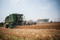 Reaping the wheat harvest Royalty Free Stock Photos