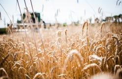 Reaping the wheat harvest. July 24, 2015. Kiev region, Ukraine. Ukrainian farmers are reaping the wheat harvest in the fields near Kiev stock photo