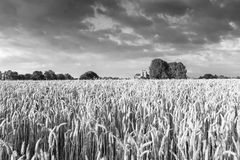 Reaping white near the Hostoric Town Veere. With view  on the bi Royalty Free Stock Photo