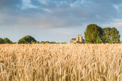 Reaping white near the Hostoric Town Veere. With view  on the bi Royalty Free Stock Images