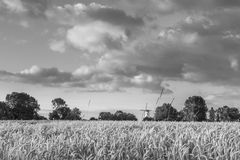 Reaping white near the Hostoric Town Veere. With view  on the bi Royalty Free Stock Photos
