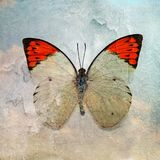 Rear butterfly image. Grunge butterfly wallpaper texture image Royalty Free Stock Photography