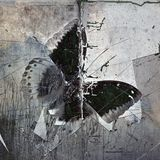 Rear butterfly image. Grunge butterfly wallpaper texture image Royalty Free Stock Images