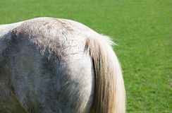 Rear end of a horse. In a meadow royalty free stock photo