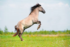 Rear free horse in the field Stock Image