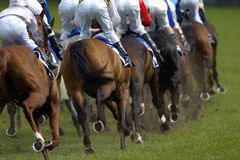 Rear racing 03. A pack of horses race around the first turn Royalty Free Stock Photos