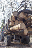 Rear of transport loaded with wood Royalty Free Stock Images