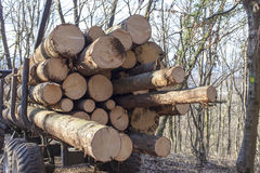 Rear of transport loaded with wood. Tractor truck load of logs on mountain forest road Stock Photography