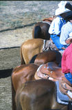 Rear veiw cowboys. Cowboys and their horses waiting at a rodeo Royalty Free Stock Images