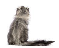Rear view of an American Curl kitten, 3 months old, sitting and looking up Stock Photos