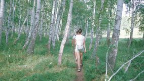 Rear view: couple with backpacks on their backs follow a path in the birch forest stock footage