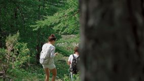 Rear view: couple with backpacks on their backs follow a path in the forest stock footage