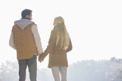 Rear view of couple holding hands while looking at each other in park Royalty Free Stock Photos
