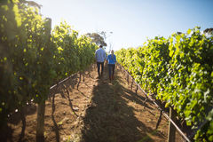 Rear view of couple walking amidst plants at vineyard Stock Photos