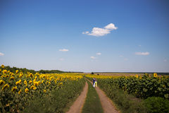 Rear view of couple walking in summer countryside royalty free stock photo