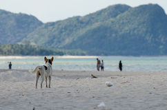 Rear view of a dog alone on smooth wet beach sand looking out to sea and people Stock Photos
