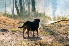 Rear view of dog on path near branch. With trees growing around him and copy space above Royalty Free Stock Image