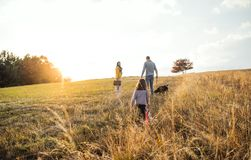 A rear view of family with child and a dog on a walk in autumn nature at sunset. royalty free stock images
