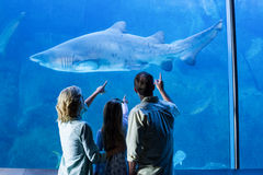 Rear view of family pointing at shark in a tank Stock Photos