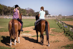 Rear view of female friends sitting on horse. At paddock stock photography