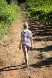 Rear view of female vintner walking in vineyard. On a sunny day Stock Image
