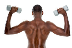 Rear view of a fit shirtless man lifting dumbbells Royalty Free Stock Photos