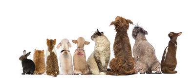 Rear view of a group of pets, Dogs, cats, rabbit, sitting
