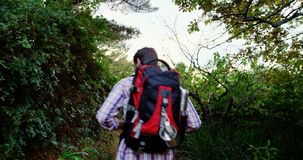 Rear view of hiker walking. In a forest stock footage