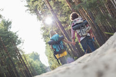 Rear view of hiking couple holding hands while walking in forest Royalty Free Stock Photo