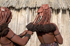 Rear view of himba women. That make each other the traditional hairstyle of Himbaб near Opuwo town, Namibia Royalty Free Stock Photo