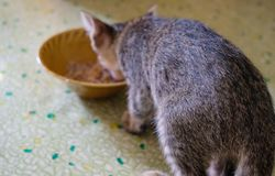 Rear view a kitten eating food in a bowl on the floor stock photography