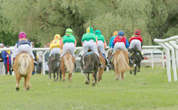 Rear view of a large group of racing ponys stock photos
